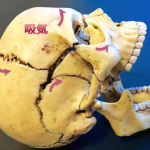 平たい顔7【平たい顔から額に丸みを出す方法】前頭骨の呼吸運動