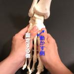足の骨をスライドする方法知ってますか?全身が整うんです!