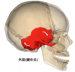 右側頭骨外旋