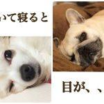 【シンメトリーフェイシャル傾いて寝ていると目の大きさ違いの原因に!】
