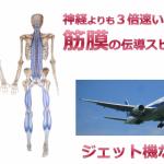 神経よりも3倍も早く!旅客機同様の速さで姿勢をコントロールしている筋膜