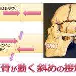 平たい顔3【顔が平たくなる仰向け寝の理由1】頭蓋骨が動くのは斜めの接触面