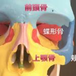 目の左右非対称を解消させる鍵となる4つの骨