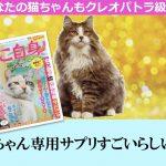マッチー先生の愛する猫ちゃんが美しいまま元気で長生きできる方法とは?
