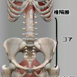 【骨盤底筋が引きあがる理由は、呼吸による横隔膜の動きに連動するから!!】
