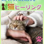 【猫の飼い主さんへ】年末年始、猫ちゃんの体調不良を予防する方法