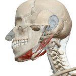 顔の全たるみが乗っかる下顎対策が「美人寿命」を長くする