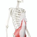 【お腹を薄くする腹筋運動の超シンプルな法則とは?】